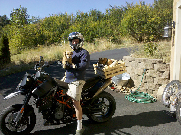 Dogs and Motorcycle